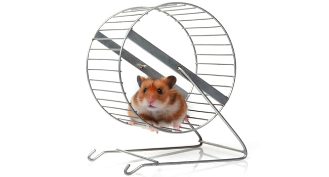 Banh Xe Sat Cho Chuot Hamster