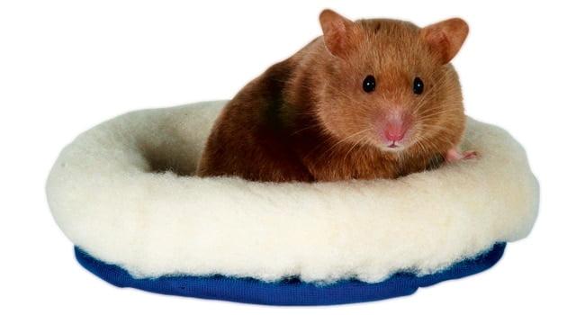 Giuong Ngu Cho Chuot Hamster