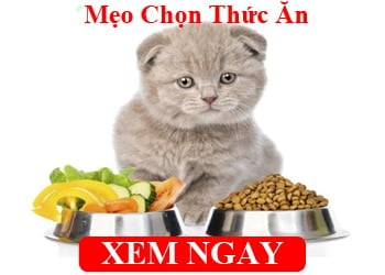 Meo Chon Thuc An Cho Meo