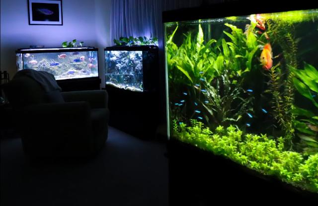 Bể cá cảnh bằng kính và Acrylic
