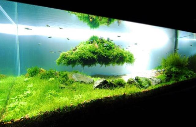 Bể cá cảnh đẹp