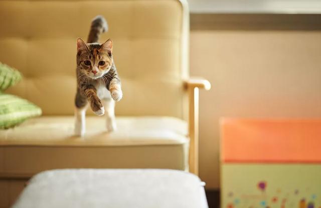 Bệnh Đĩa Đệm Ở Mèo
