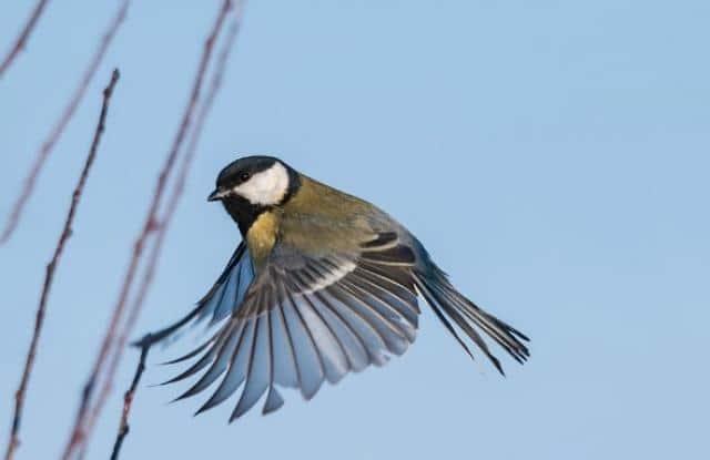 Bệnh Do Vi Khuẩn Ở Chim