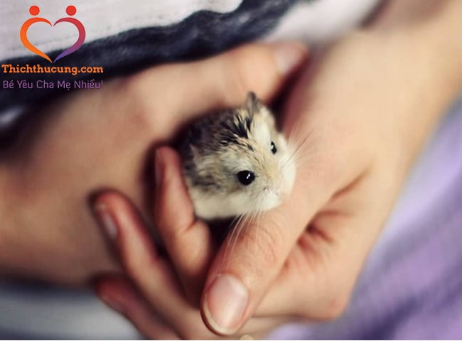 Bệnh Salmonellosis ở chuột hamster