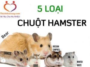 cac loai chuot hamster