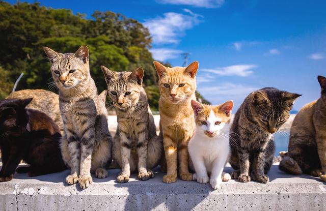 Các Loại Mèo