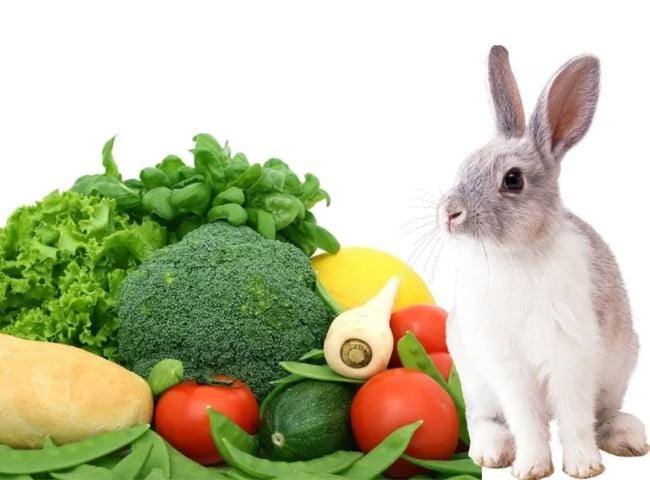 các loại rau củ nên và không nên làm thức ăn cho thỏ
