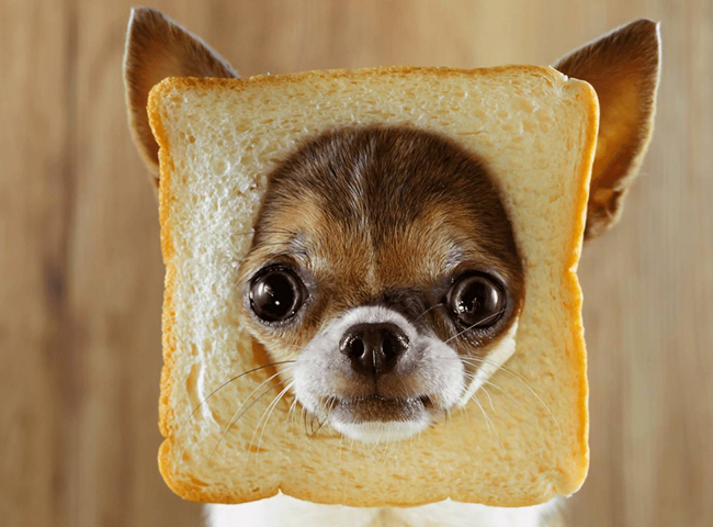 cho an banh mi sanwich