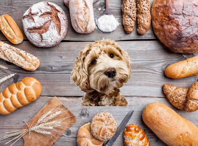 Chó Ăn Bánh Mì