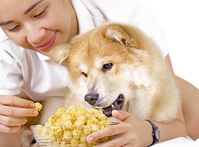 Chó Ăn Bỏng Ngô