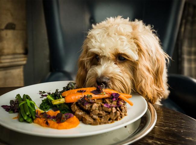 Chó Ăn Cải Xoăn
