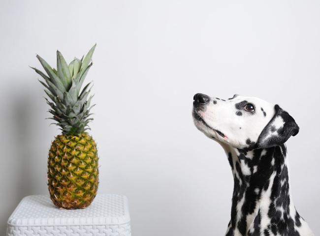 Chó Ăn Dứa