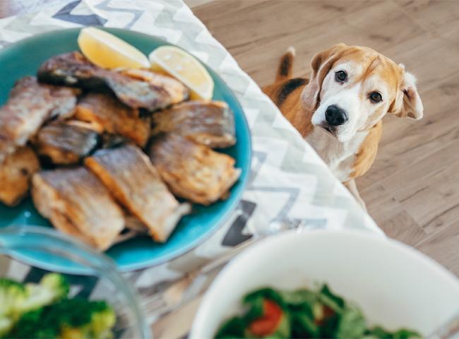 Chó Ăn Hải Sản Được Không
