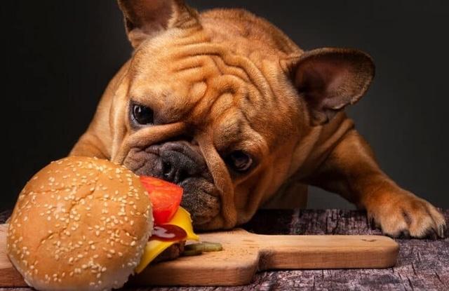 Chó ăn hạt vừng
