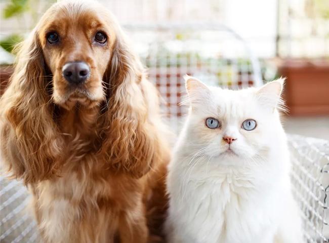 Chó Ăn Phân Mèo