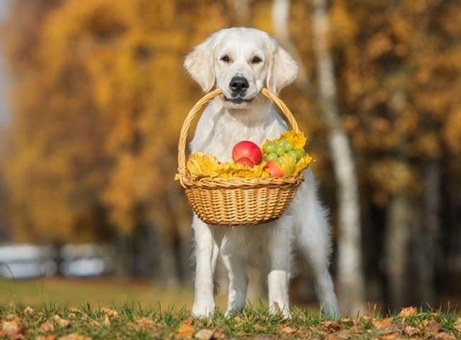Chó Ăn Trái Cây