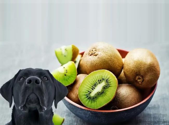 Chó Ăn Wiki