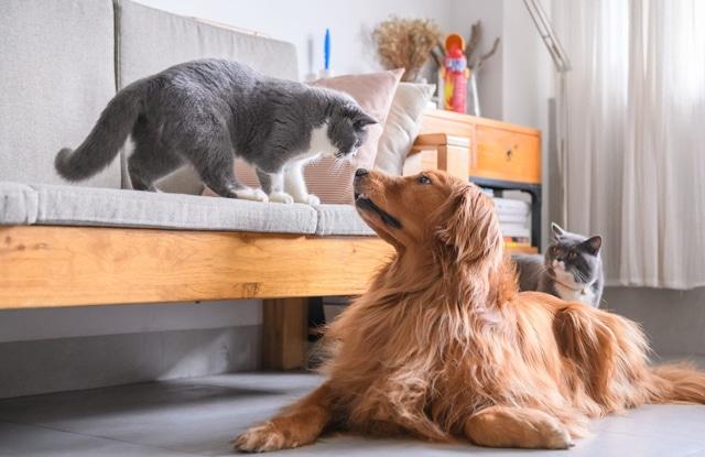Chó Hoà Thuận Với Mèo