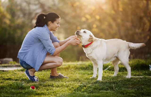 Chó Vẫy Đuôi
