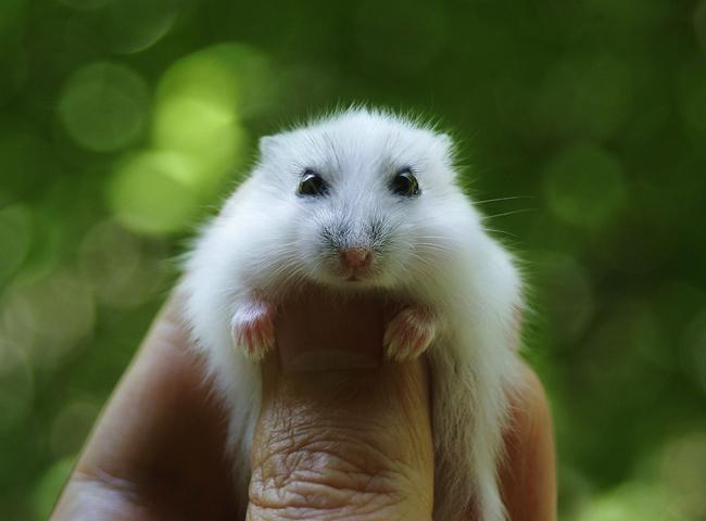 Chọn Hamster Khoẻ Mạnh