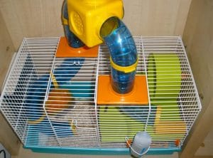 chon long cho chuot hamster