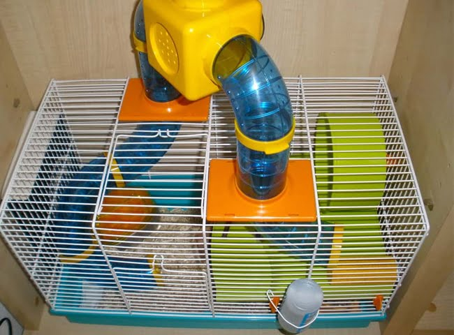 chọn lồng cho chuột hamster