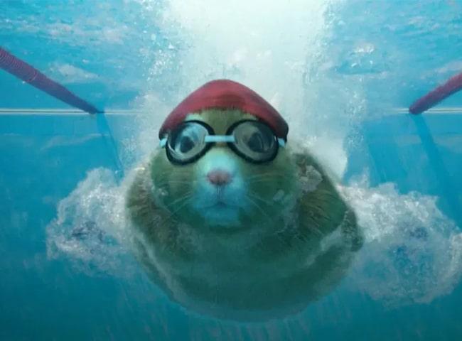 Chuột Hamster Bơi