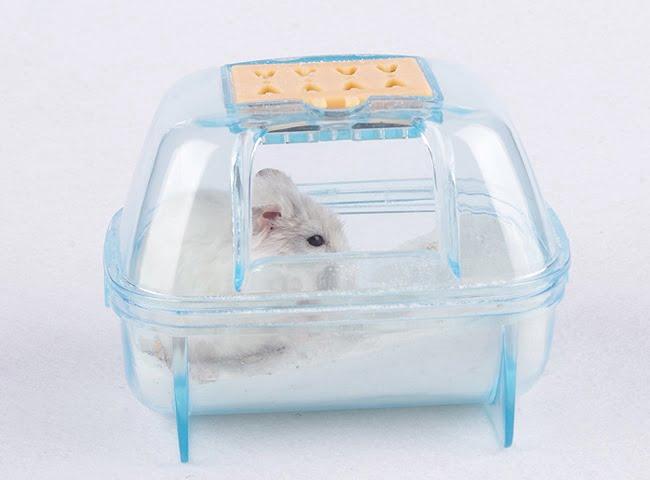 chuột hamster có cần tắm không