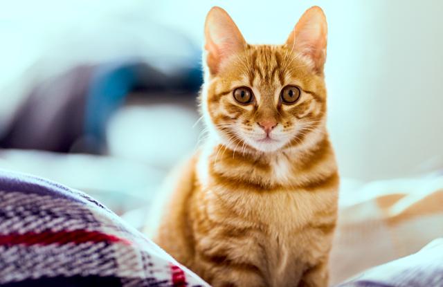 Tên Cho Mèo