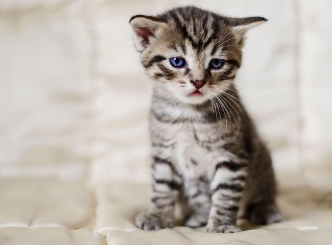Dấu Hiệu Mèo Con Bị Bệnh