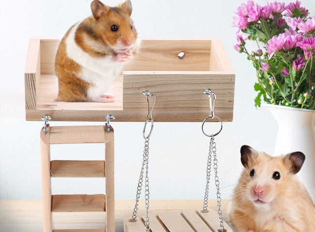 đồ chơi cho chuột hamster