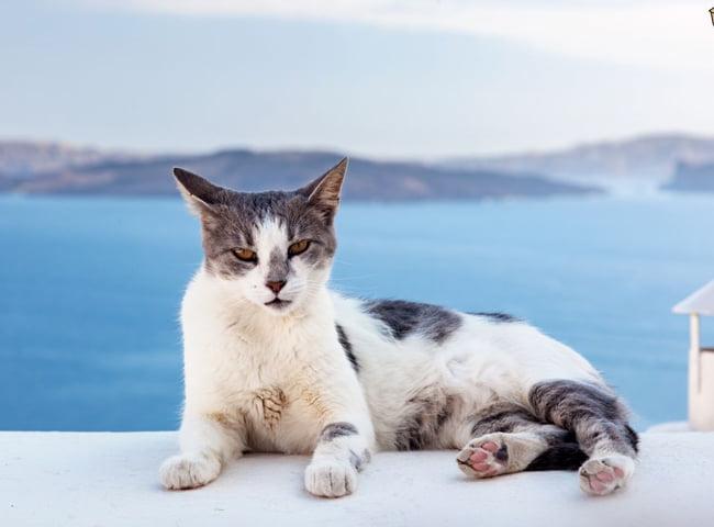 giong Meo Aegean