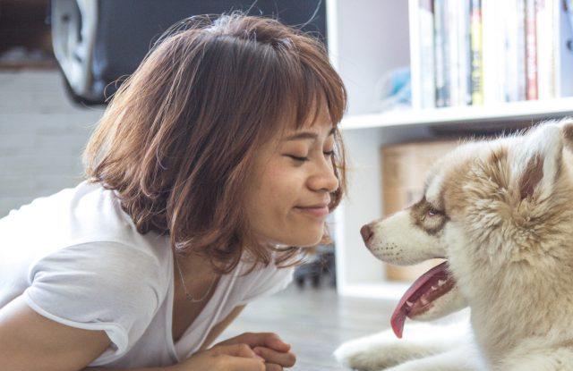 Chó Không Gây Dị Ứng