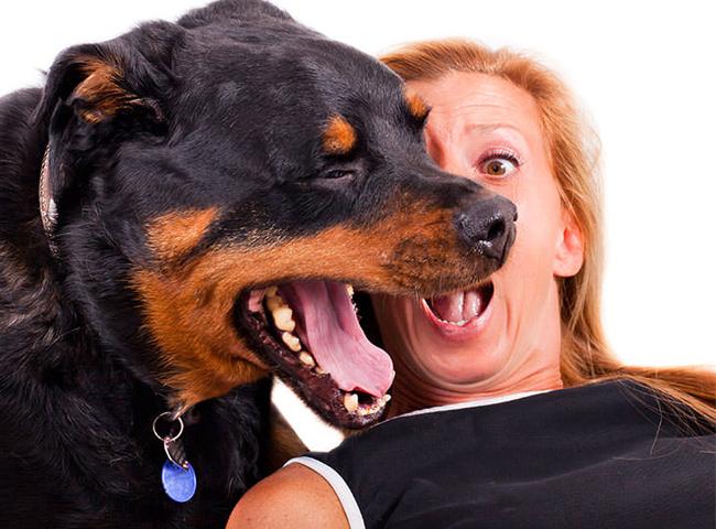 giong cho tre em nen tranh cho Rottweiler