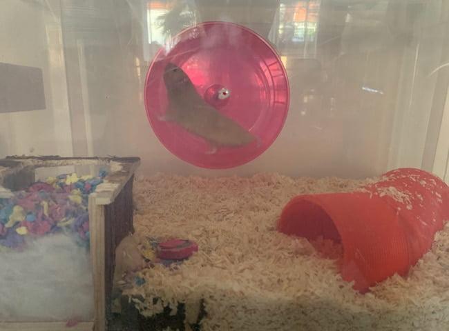kích thước bánh xe chuột hamster