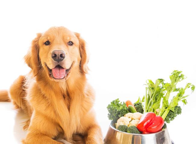 Chó Ăn Rau