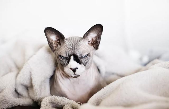 Lưu Ý Khi Tắm Cho Mèo