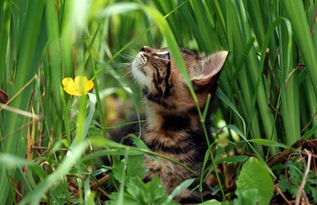 Mèo Ăn Bụi Bẩn