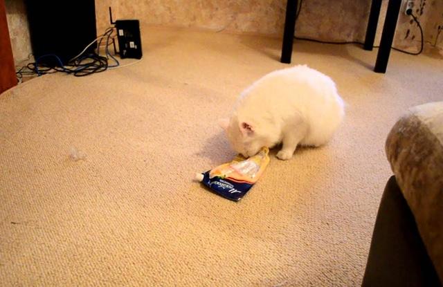 Mèo ăn mayonnaise