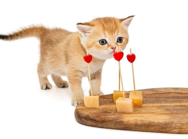mèo ăn pho mai được không