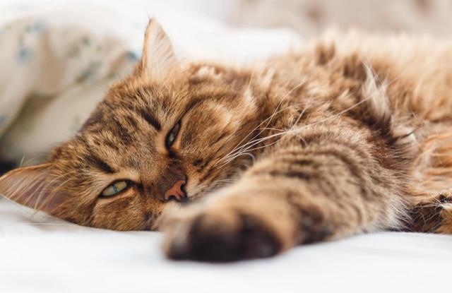 Mèo Bị Động Kinh
