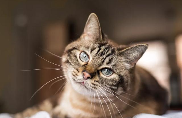 Mèo Bị Mù Màu