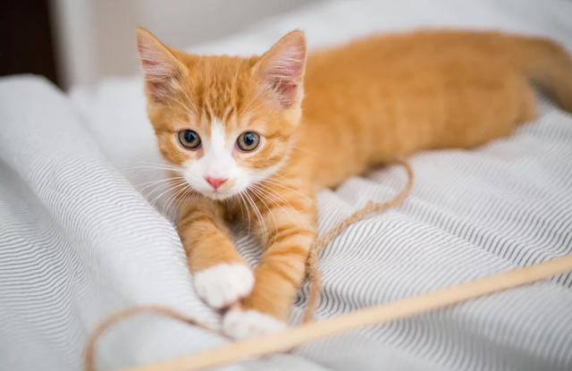 Mèo Con 6 Tháng Đến 1 Tuổi