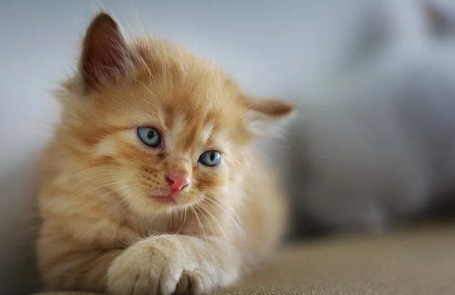 Mèo Con Ở Một Mình
