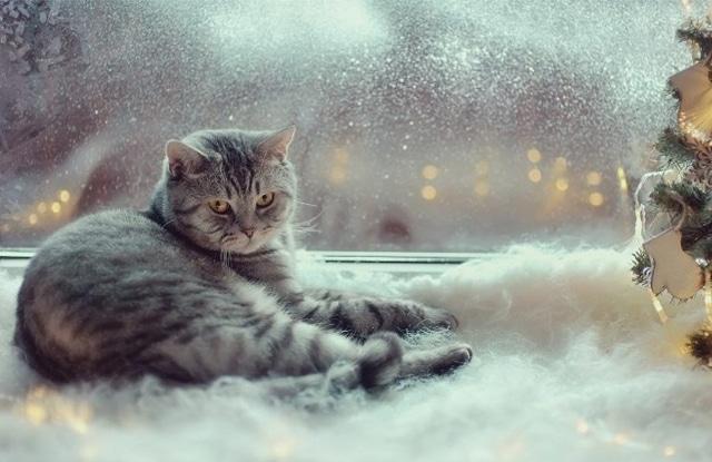 Mèo Ngủ Đông