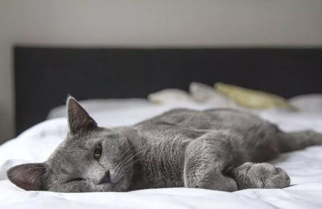 Mèo Ngủ Nhiều