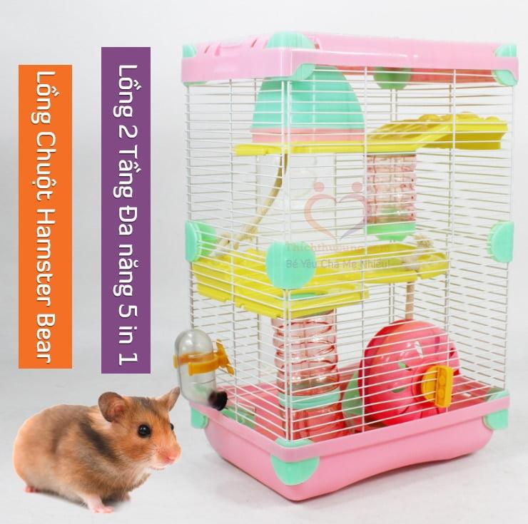 mua long chuot hamster bear o dau