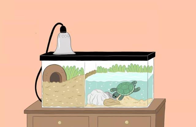 rùa Cảnh Cần Nước Sạch