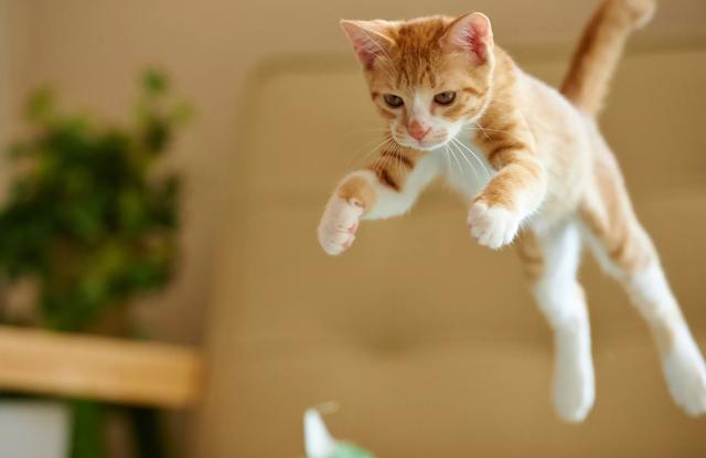 Tên Cho Mèo Cam
