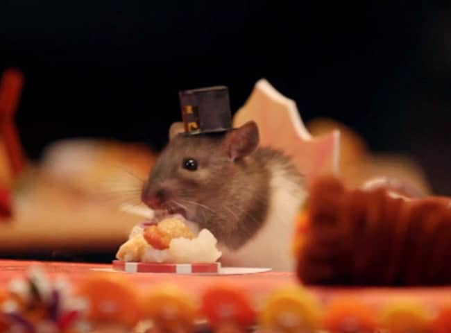 thuc pham cho chuot hamster
